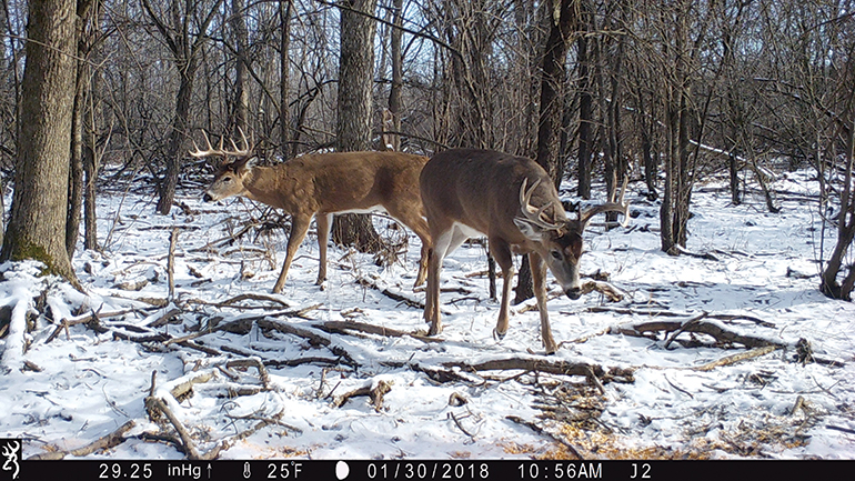 late season trail camera photo