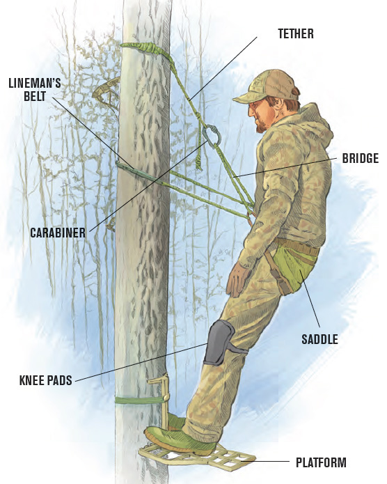 parts of a tree saddle setup