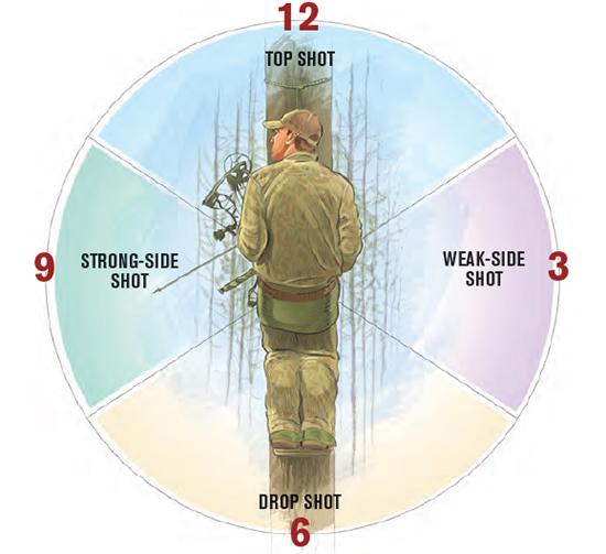 tree saddle shot clock diagram