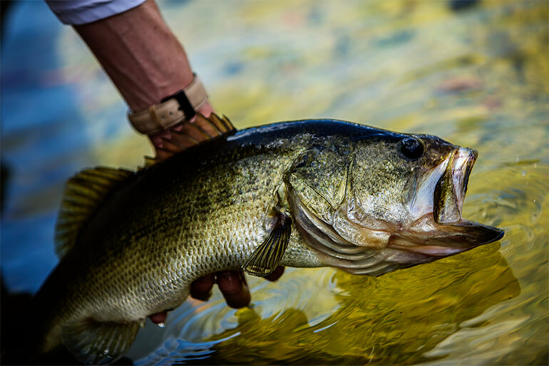 <p>For a successful year of fishing, avoid these seven common blunders that can sabotage a trip to the best fishing spots anywhere in the land.</p>
