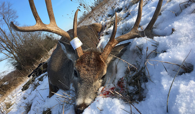 3 Late-Season Whitetail Guidelines