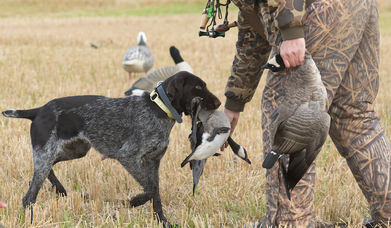 Illinois Waterfowl Hunting Forecast 2018