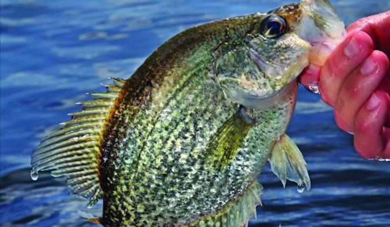 Add 'Big Muddy' to Your Crappie Destinations List