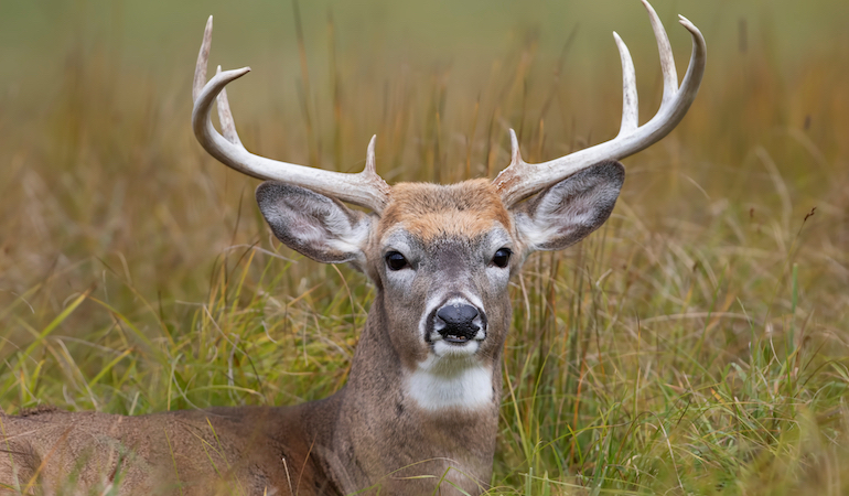 Where's the Best Deer Hunting in America 2018?