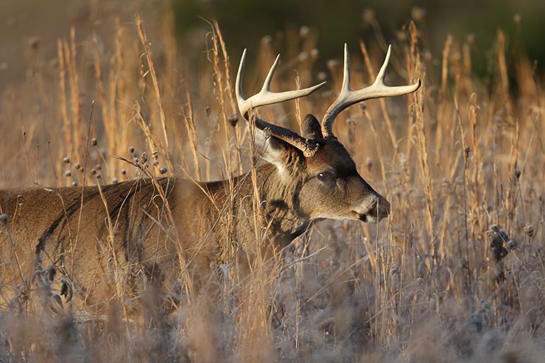 Ground Zero: Missouri's Record Bucks