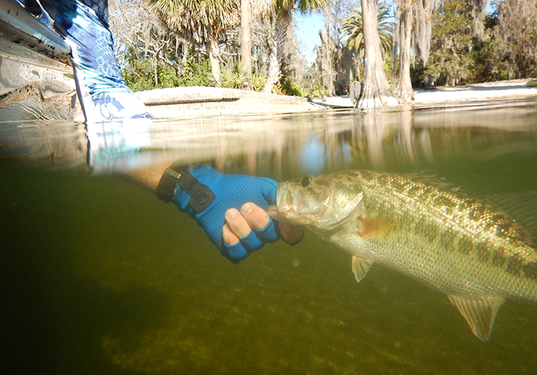 Largemouth bass is the premier freshwater gamefish for a high percentage of Texas anglers.