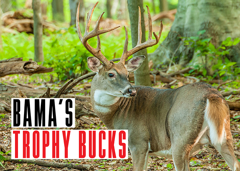Alabama Trophy Bucks