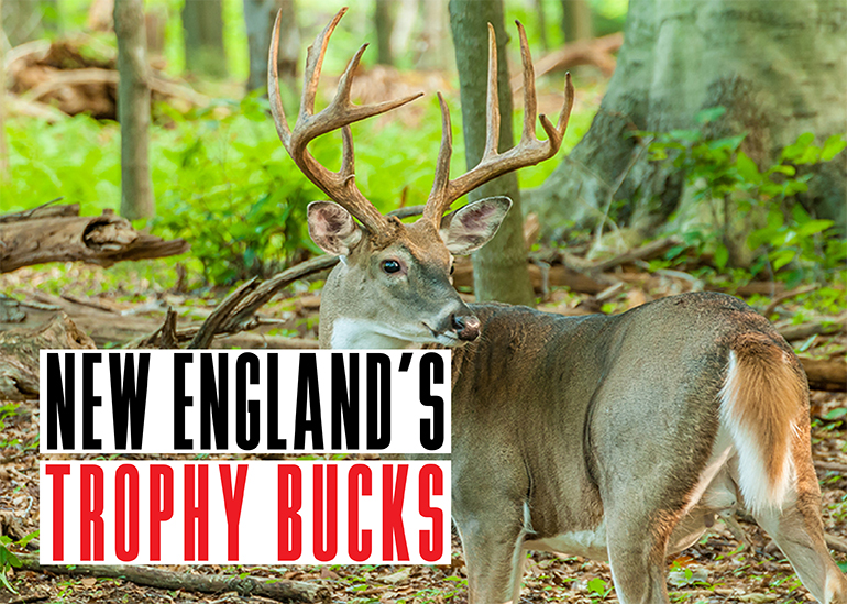 New England Trophy Bucks
