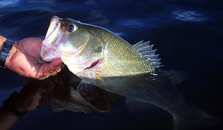 8 Ways to Work Lures for More Fall Bass