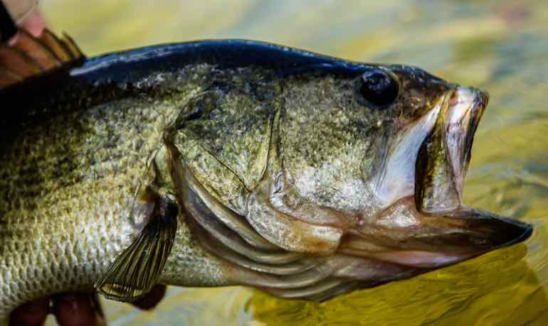 California S Overlooked Bass Fishing