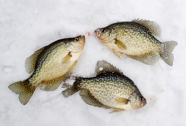 Ice Fishing: Avoid These Panfish Mistakes