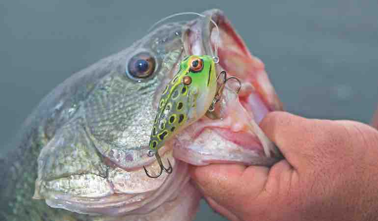 Topwater Lures Tactics For Summer Bass