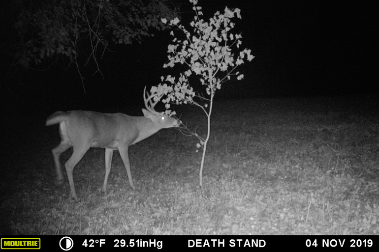 Moultrie-Mobile-Buck-Licking-Branch.jpg