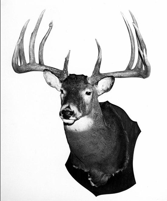 Larry Gibson buck mount