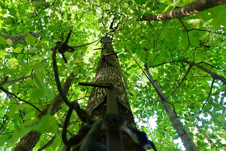 """Treestand"