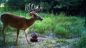 Hunters May See Big Racks This Fall
