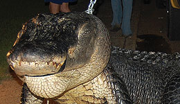 Alabama Hunters Recognized for Largest Gators