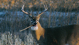 Indiana Landowners can Partner with Hunters to Control Deer