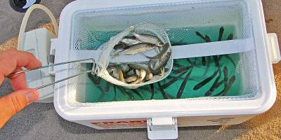 An aerated bait bucket keeps minnows ready for action. (David A. Brown photo)