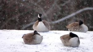 Helpful Hints to Improve Your Waterfowl Shooting