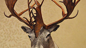 Samson's World Record Woodland Caribou Receives Coveted Ishi Award