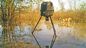 Deer Feeders Deliver Cost-Effective Results, Even During a Flood