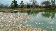Drought Taking Toll On Fish