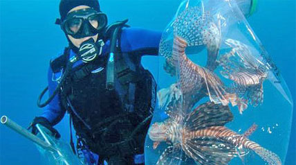 Dive Derbies Taking Out Invasive Lionfish