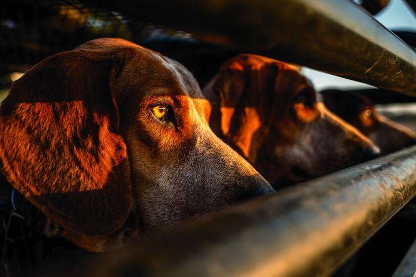<p>Throughout history, dogs have been a hunter's constant companion.</p>