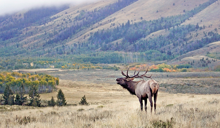 The Best Units for Hunting Elk, Mule Deer & Antelope