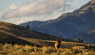 Breeding season is over, elk are smart, but competition is low.