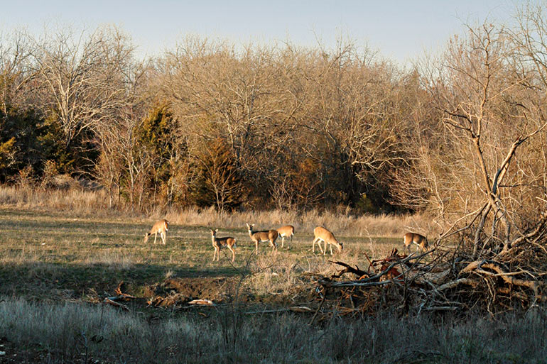 Daylight Deer Movement During the Rut