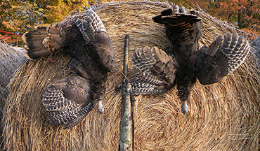 When deer movement slows, get out and lay down some white meat. Follow these tactics to bag a fall bird!