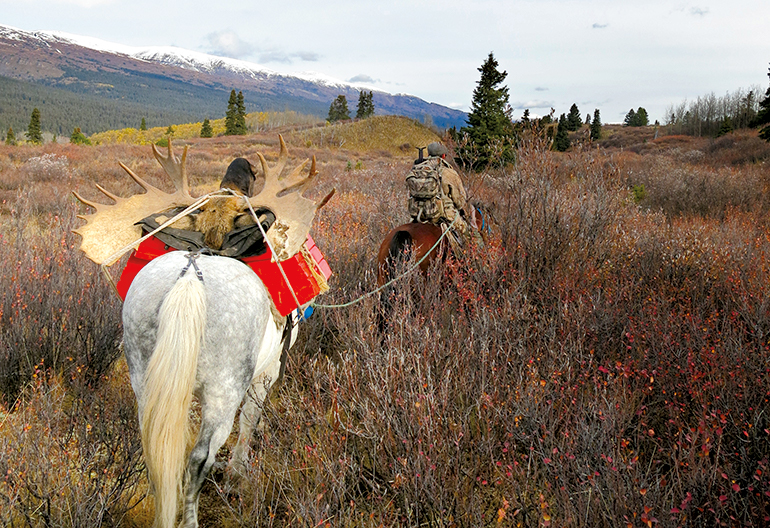 hauling out moose on horseback