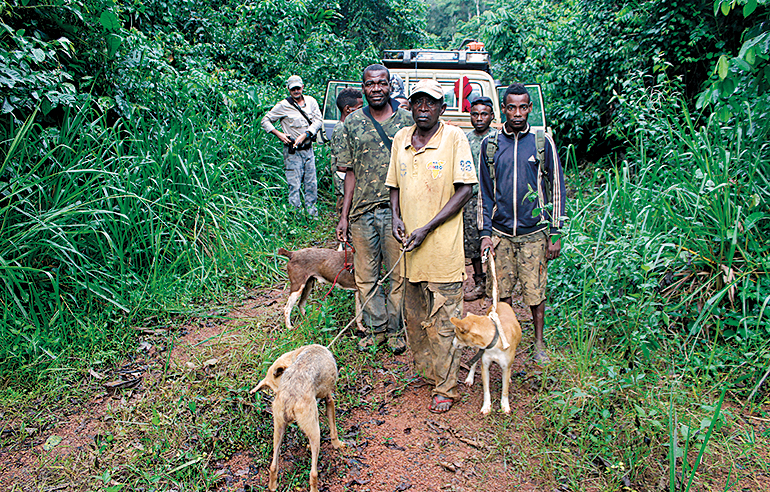 Pygmies with dogs forest hunting