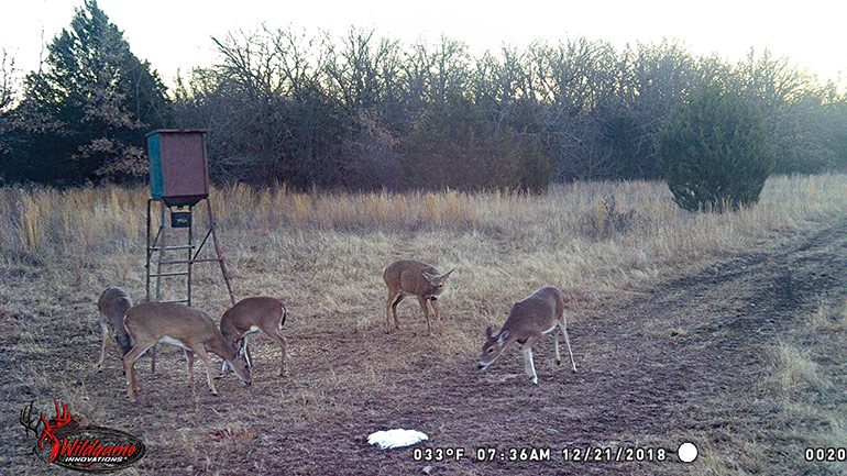 trail cam photo of whitetails near feeder