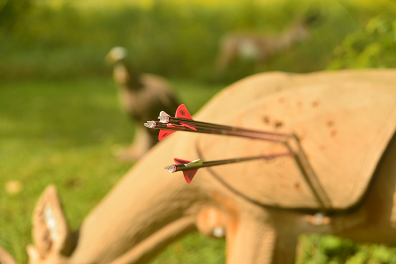 3D deer target with arrow group