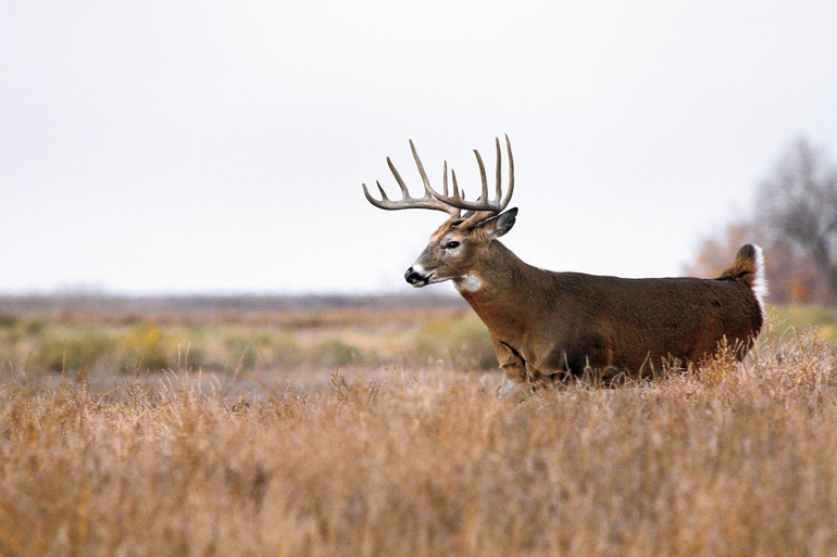 How to Hunt Whitetails in Open Country