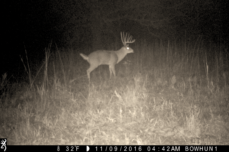 Buck Movements During The Hunting Season