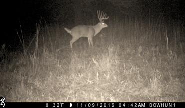It's interesting how quickly deer change their daily routines once they know they are being hunted.