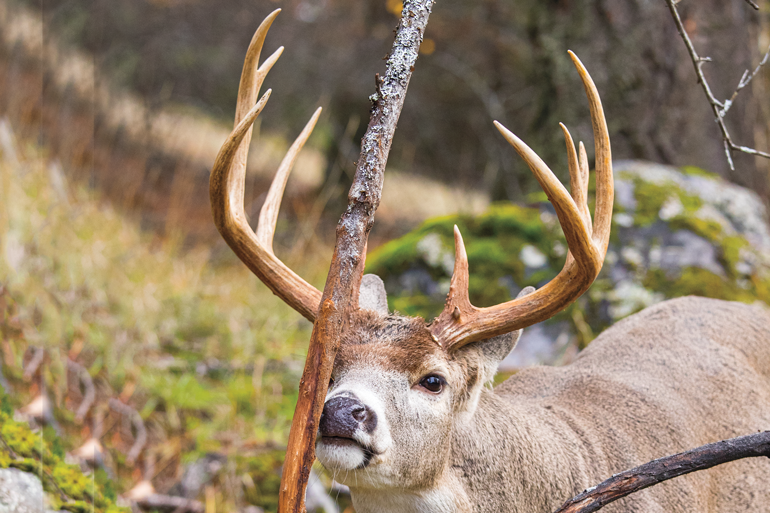 Buck Rubs: What Can They Tell Us?