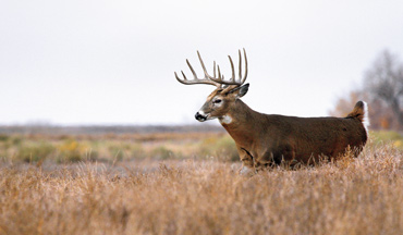 Bowhunting whitetails on the open plains can provide several unique challenges.