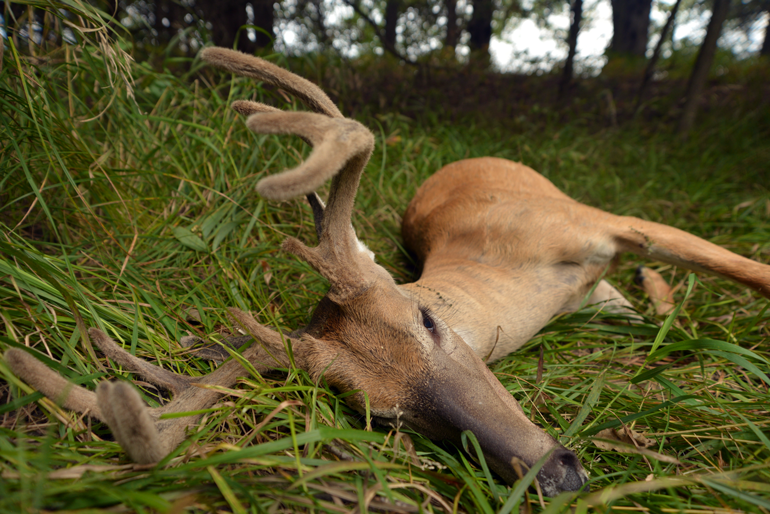 5 Steps To Early-Season Whitetail Success