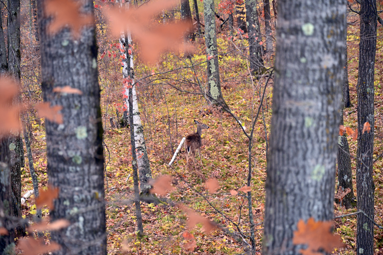 Treestand-Angles-Doe.jpg