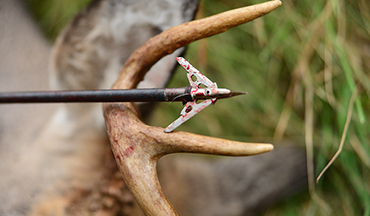 Whether you're looking for an all-around workhorse or a broadhead for a specific species, we've found the best options for your bowhunting needs!