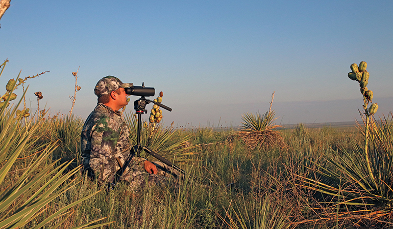 Follow these tips for spotting and stalking mule deer with a bow!