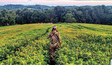 We hunter focus on the food sources used by the game we hunt. For whitetails, check the beans!