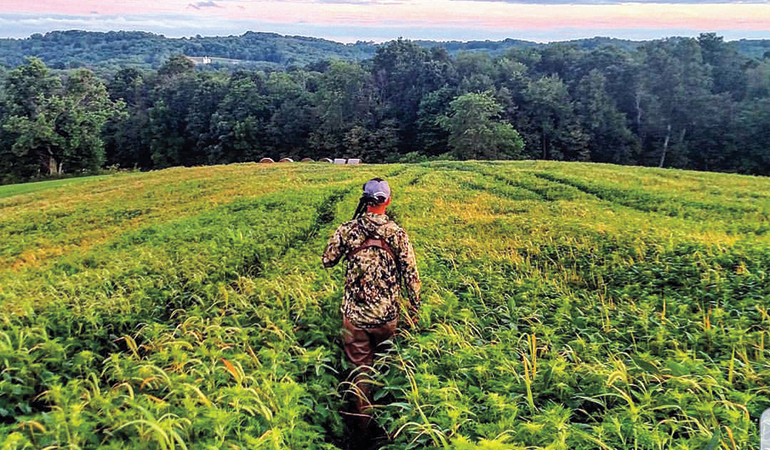 Why & How to Hunt Soybean Fields for Whitetails