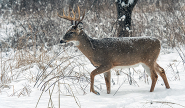 Some of the best deer hunting can be found well after the rut has come and gone.