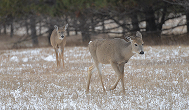 The worst deer hunting of the year is upon us, but that doesn't mean it's time to stay inside.